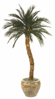 Preserved Canary Palm Tree w/ 36 Fronds, 10'
