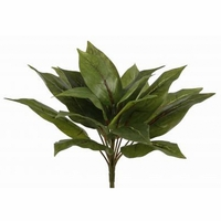 11in. Dracaena Bush, Outdoor Rated