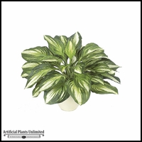 "17"" Hosta Plant - Green / White 