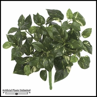 17in. Pothos Bush - Green|Indoor - NFR