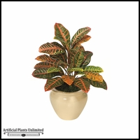 2' Croton Bush - Multi|Indoor