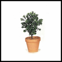 "20"" Outdoor Rated Artificial Dark Boxwood"