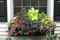 'I Love My Summer Window Box' Contest 2007