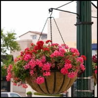 "22"" English Garden Flat Steel Hanging Basket"