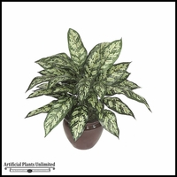 "24"" Aglaonema Bush - Two Tone Green 