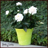 2' Outdoor Artificial Gardenia - White
