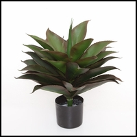 24in. Broad Leaf Agave in Weighted Base, Indoor Rated