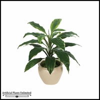 "27.5"" Dracaena Plant - Green 