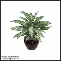 "27"" Aglaonema - Grey/Green 