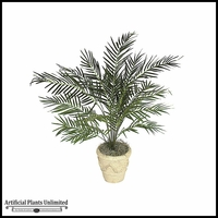 3.5' Areca Palm - Green|Indoor