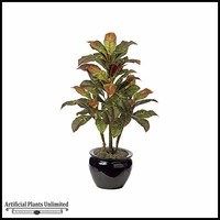 3' Croton Bush - Multi | Indoor