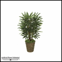 3' Lady Palm Tree - Green | Indoor