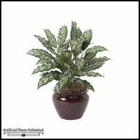 "30"" Aglaonema Plant - Two Tone Green 