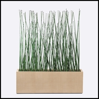 6'L Horsetail Grove in Modern Planter, Outdoor