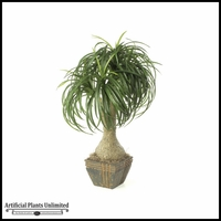 "32"" Ponytail Palm - Green 