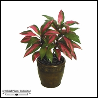 "34"" Cordyline - Red/Green 
