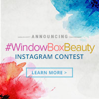 #WindowBoxBeauty Instagram Contest