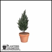 "37"" Outdoor Rated Artificial Cypress"