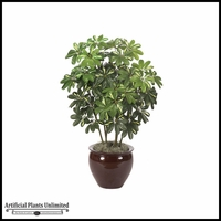 4' Baby Schefflera - Green/Yellow | Indoor