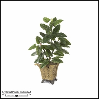 4' Emerald Philo - Green | Indoor