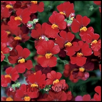 4/Pk. Box - Sunsatia Cranberry