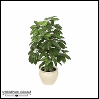 4' Schefflera - Green | Indoor