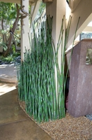 """42""""H Outdoor Artificial Horsetail - Single Reed"""