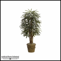 5' Lady Palm Tree - Green | Indoor