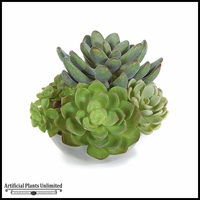 5in. Potted Succulents - Green|Indoor