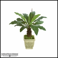 "51"" Anthurium Plant - Two Tone Green 