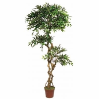 6.5' Mini Ficus Tree, Outdoor Rated