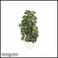 6' Schefflera - Green | Indoor - NFR