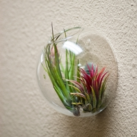 "6"" Wall Bubble Terrarium - Empty"