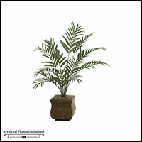 7' Kentia Palm Tree - Green|Indoor