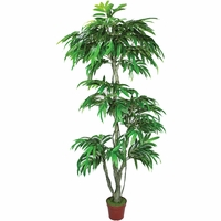 7' Mango Topiary Tree, Outdoor Rated