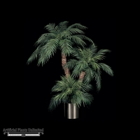7' Roebellini Palm - Green | Indoor