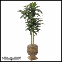 72in. Dracaena Tree