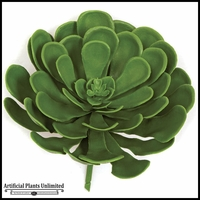 8in. Green Echeveria, Outdoor