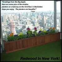 A Redwood Greeting from the Big Apple!