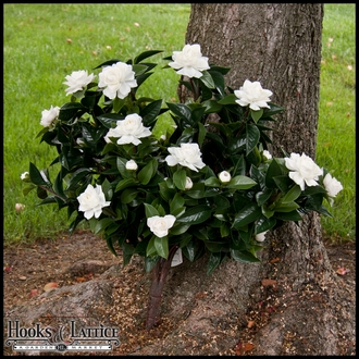 Artificial Gardenia Flowers-Outdoor