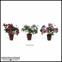 Azalea Plant 18in. (3 Colors)
