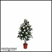 Bay Leaf Plant 3.5in.