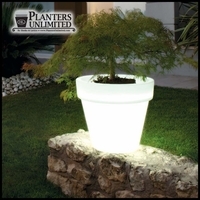 Bellini Illuminated Planters