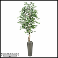 Black Olive Tree in Tall Round Metal Planter, 8'