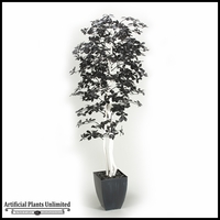 Black Olive Tree with White Trunks in Square Metal Planter, 7'