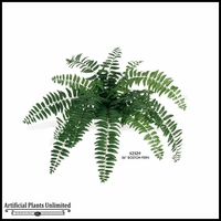 Boston Fern 28in.