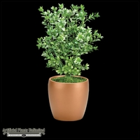 Boxwood Bush with Large Leaves 19in - Outdoor Rated