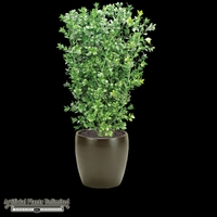 Boxwood Bush with Large Leaves 26in - Outdoor Rated