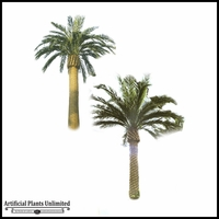 Canary Date Palm 25' Outdoor Rated