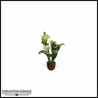 Cattleya Orchid Plant 19.5in.